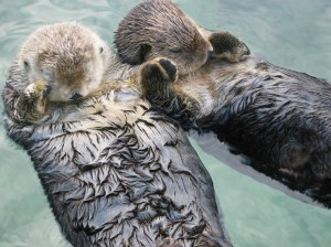 sea-otters-holding-hands-big